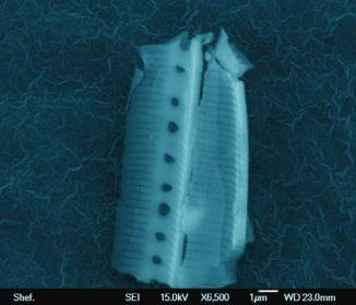 image_1393-alien-diatom